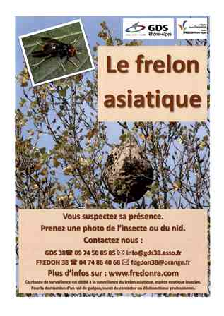 affiche-frelon